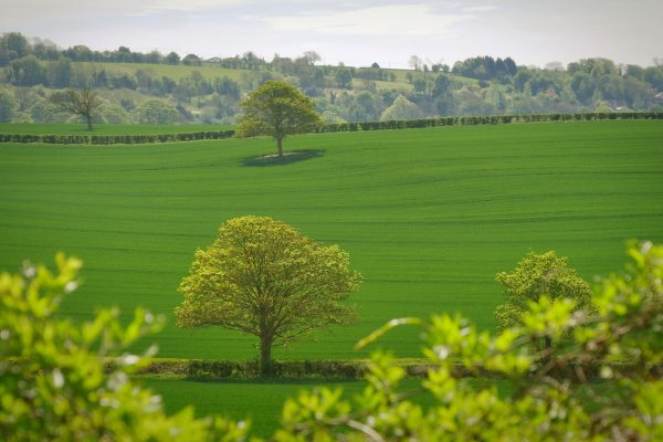 Develop a green economic activity